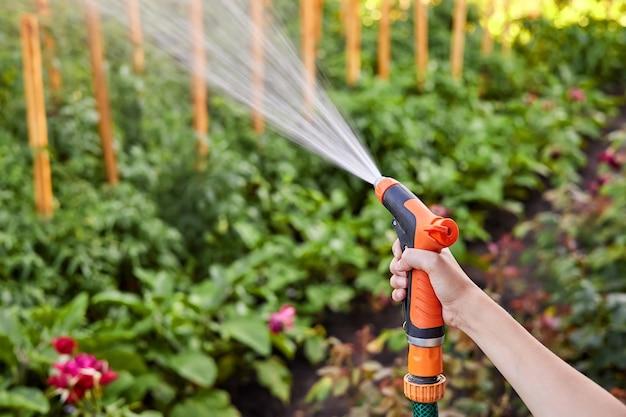 散水ホースから野菜畑に水をまく女の子