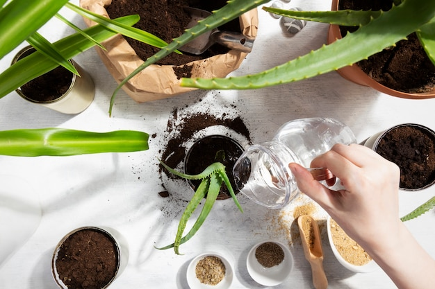 家の庭に植えられた多肉植物に水をまく少女。スズを再利用して植物を育てる。廃棄物ゼロ、リサイクル、再利用、アップサイクル。上面図