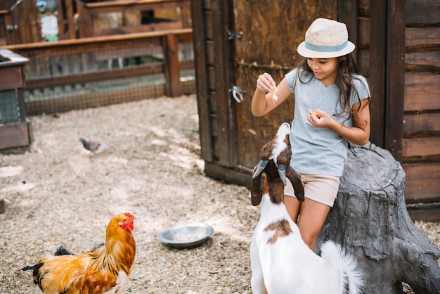 Girl wearing hat feeding food to goat and hen in the barn
