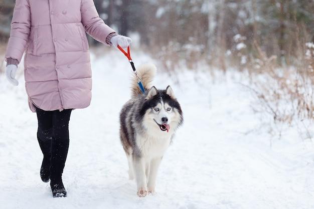 Девушка с собакой породы hussy на прогулке в лесу зимой.