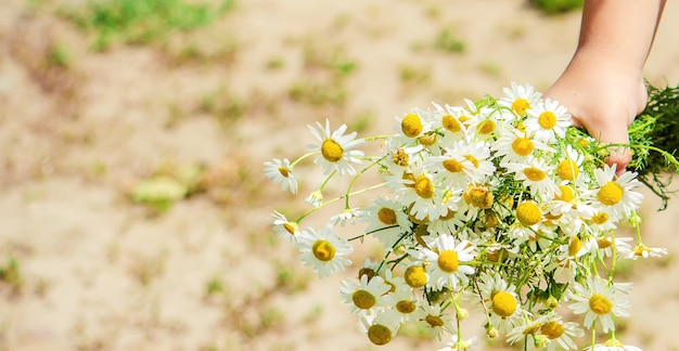 Girl with chamomile. photo. nature flowers.