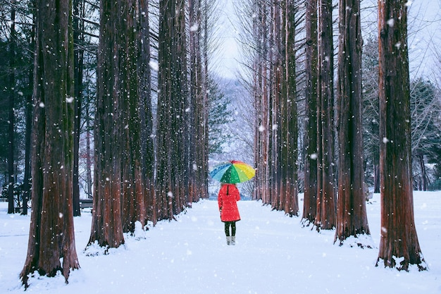 Girl with colourful umbrella in row tree, nami island in south korea. winter in south korea.