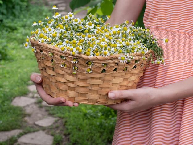 Girl with daisy flowers in wicker basket.