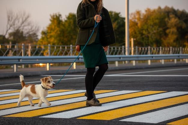 Девушка с джек рассел терьер идет по пешеходному переходу