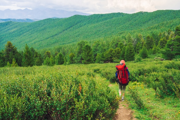 Girl with red large backpack go on footpath across green meadow to coniferous forest.