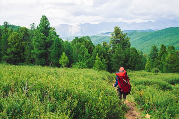 Girl with red large backpack go on footpath across green meadow to coniferous forest