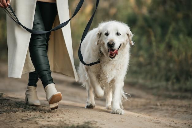 森の小道に白いゴールデンレトリバー犬と女の子