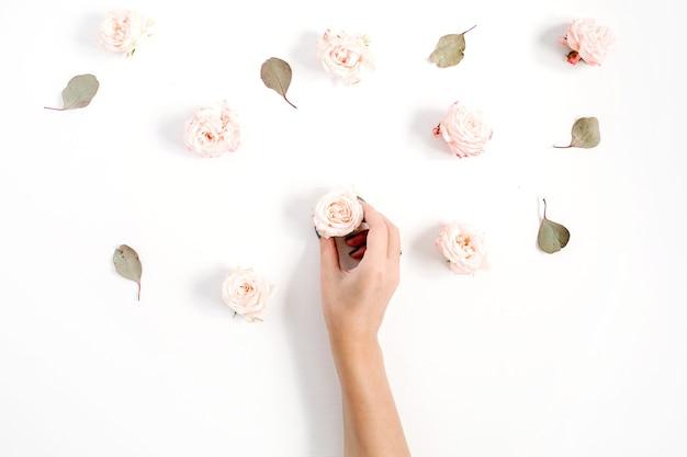 Девушки рука держит бутон розы и узор цветов из бежевых роз, листьев эвкалипта на белом фоне. плоская планировка, вид сверху