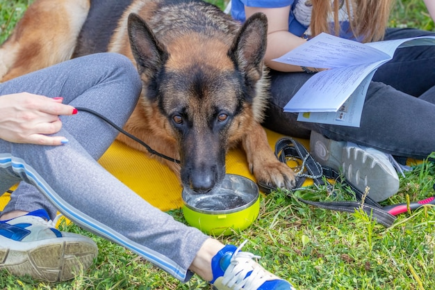 Girls in the park with a dog reading a book. shepherd dog drinks water sitting near people