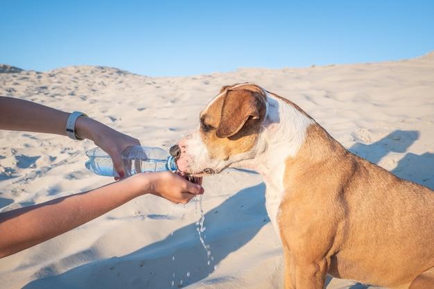 Поить собаку. женская рука держит бутылку воды для жаждущего питомца в жаркий день на открытом воздухе