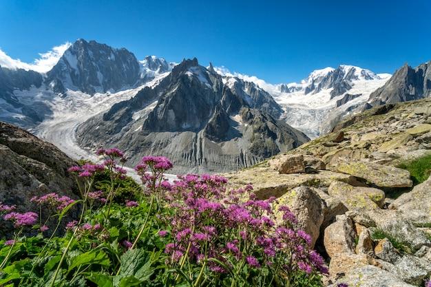 Экскурсия по леднику летом с цветущими горами в альпах