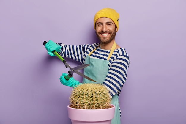 Glad man takes care of cactus in pot, holds shears, busy pruning, dressed in yellow hat, striped sweater and apron, works at home, uses secateurs, isolated on purple wall.