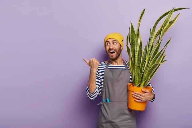 Glad satisfied young man with stubble, holds sansevieria or snakeplant, cares about indoor plant, shows direction where he bought flower, dressed in uniform