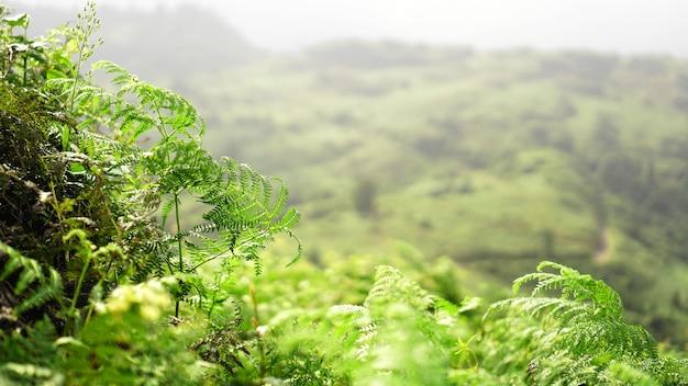 Поляна зеленого папоротника в горной долине в солнечный день