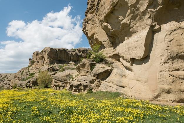 洞窟の町ウプリスツィヘジョージア周辺の黄色い花の空き地。