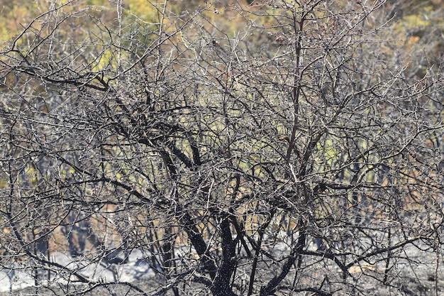 Поляна с обгоревшими деревьями и травой черный выжженный луг