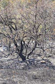 焦げた木と草の黒い焦げた牧草地の空き地