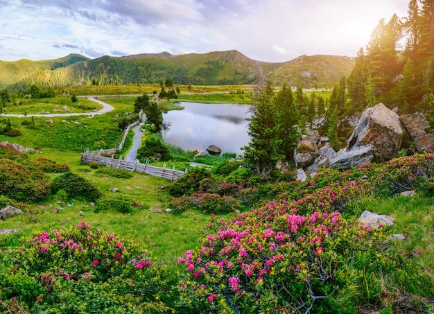 山の水の近くの花と空き地。