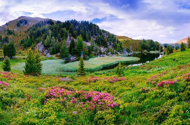山の中の水の近くの花の空き地