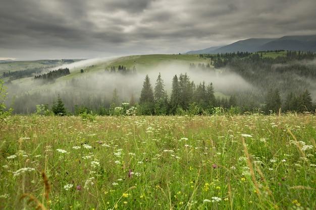 해돋이에 야생화와 산맥이있는 숲 사이의 빈터