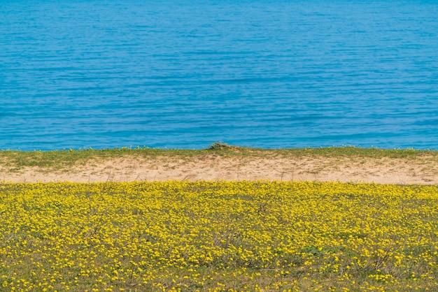 Поляна с желтыми весенними ромашками у моря, выборочный фокус