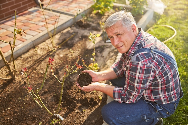 花壇の近くでしゃがみ込んでいる2握りの庭の土を持つうれしい白髪の男