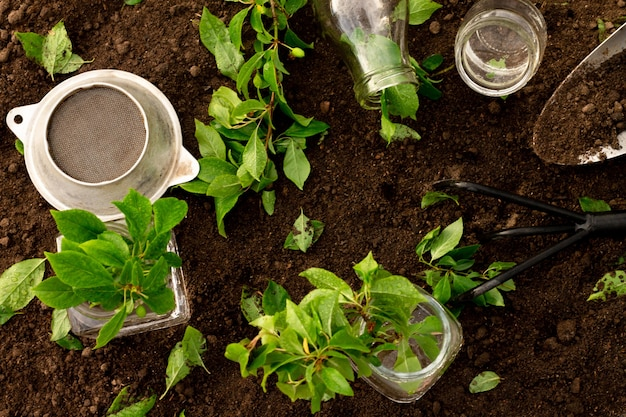 Glass bottles and jars of water, green seedlings or branches with small rake and shovel on the background of the soil. gardening and plant care concept
