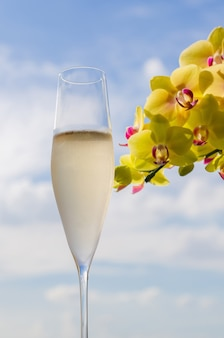 A glass of champagne with yellow phalaenopsis orchid and sky summer concept