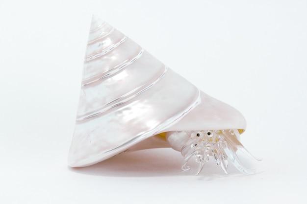 シェルは、白い背景で隔離のガラス ザリガニ