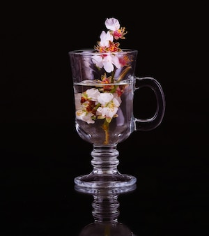 Glass cup with water and a branch of a blossoming apricot on a black background