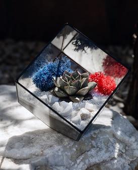 흰 돌 안에 즙이 많은 식물과 큐브 모양의 유리 florarium