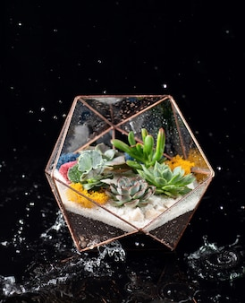 Glass florarium isolated on black acrylic among falling water. succulent plants in glass box.
