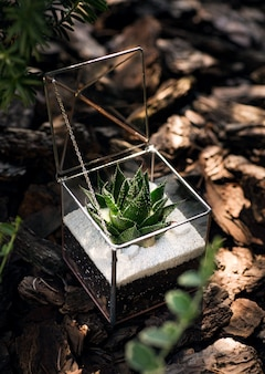内部に緑の多肉植物とガラスフローラリウム