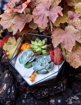 庭に多肉植物と黄色の濡れた葉の後ろにあるガラスフローラ