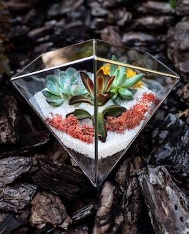 庭に多肉植物が入ったガラスのフローラリウム。背面図。