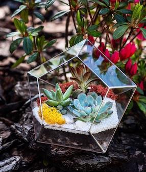 ガラスのフローラリウム、多肉植物、庭園内