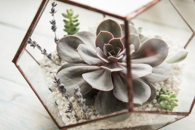 Стеклянный горшок для цветов в форме додекаэдра с эхеверией и алоэ