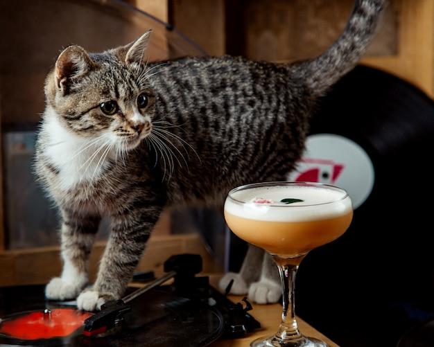 A glass of foamy cocktail garnished with flower placed next to a cat
