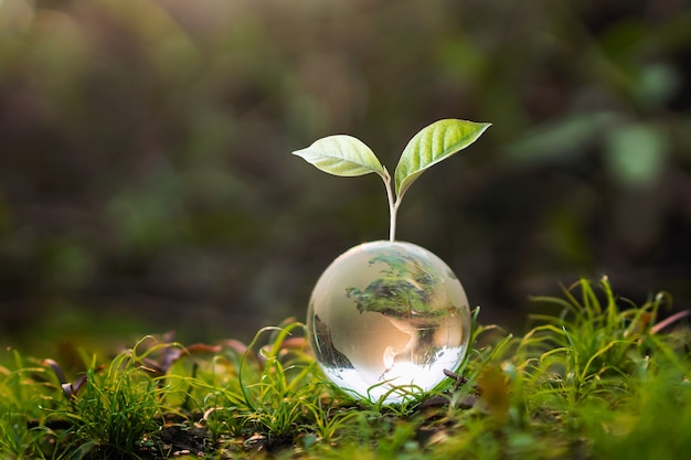 Glass globe ball with tree growing and green nature blur background.