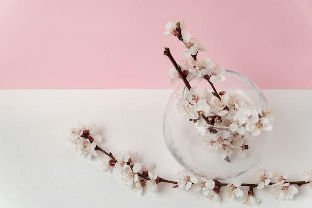 Стеклянная ваза с цветущими цветами абрикосового дерева на розовом и белом фоне. весна.
