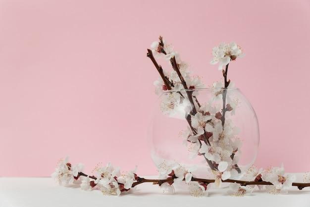Стеклянная ваза с цветущими цветами абрикосового дерева на розовом фоне. весна.