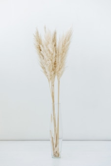 Glass vase with dry grass in boho style on white scene