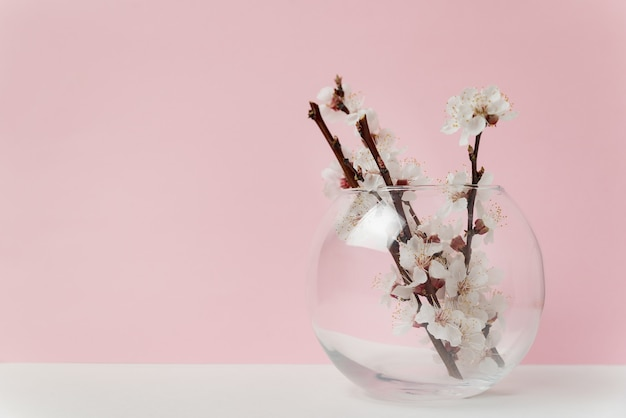 Стеклянная ваза с белыми цветами абрикосового дерева на розовом фоне.
