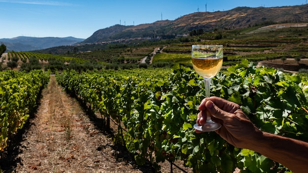 Glass of white wine on a vineyard background