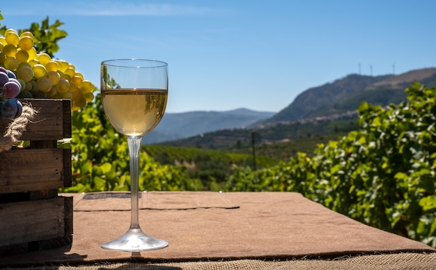 Glass of white wine with red and white grape bunches on a vineyard background