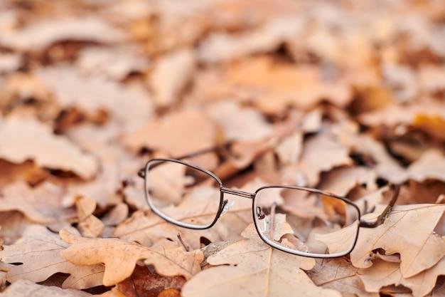 紅葉のメガネ