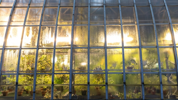 Glasshouse with artificial lighting for plants