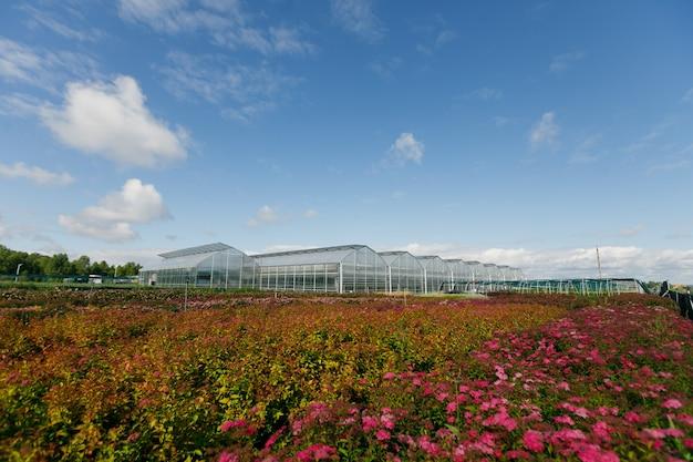 夏の日に野菜を栽培するための温室または温室。