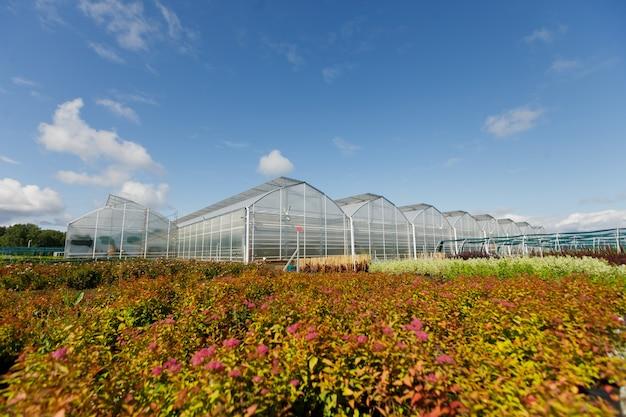 여름날 야채를 재배하기위한 온실이나 온실.