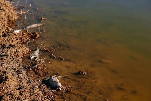 Global ecological problem is fish extinction.